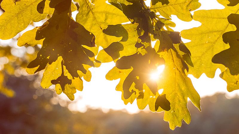 Свет сквозь солнце